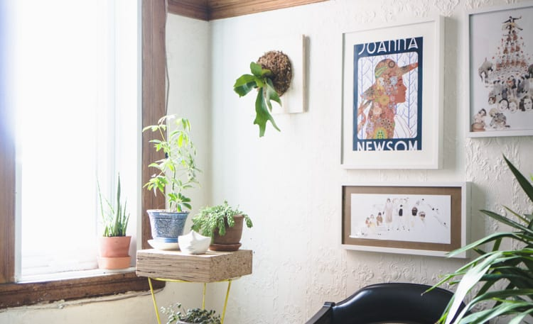 Mounting staghorn fern DIY